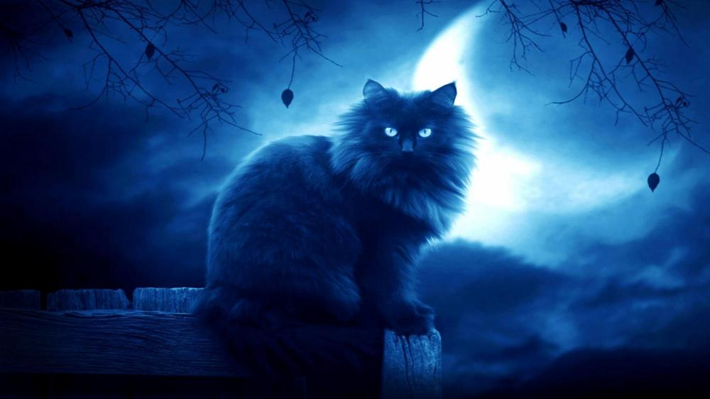 Cat in the moonlight wallpaper