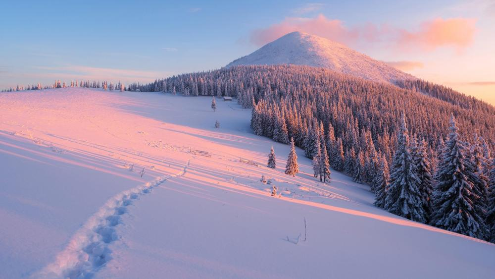 Sunny Carpathians - Ukraine wallpaper