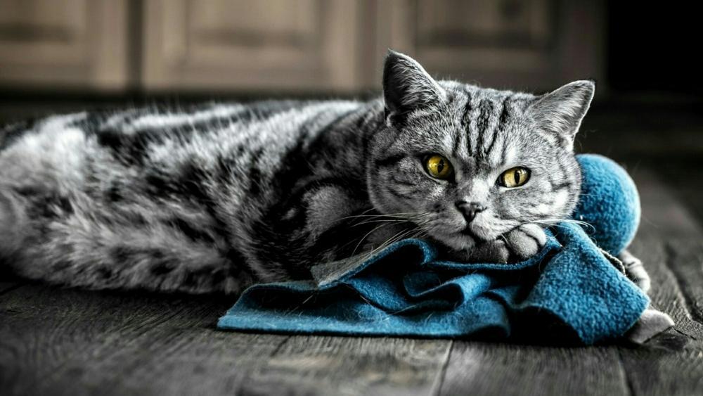 Cat on the floor wallpaper