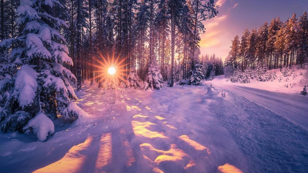 Winter forest ❄️ wallpaper