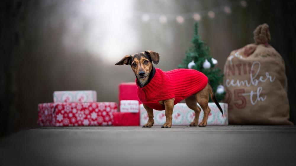 Dog with Christmas gift wallpaper