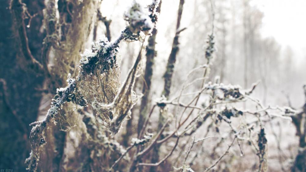 Winter hoarfrost ❄️ wallpaper