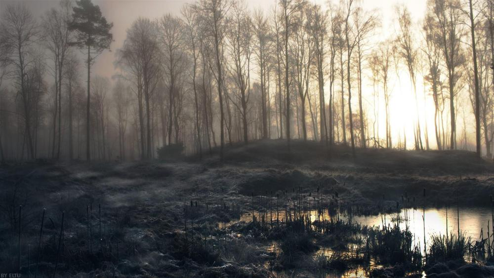 Misty swamp in winter wallpaper