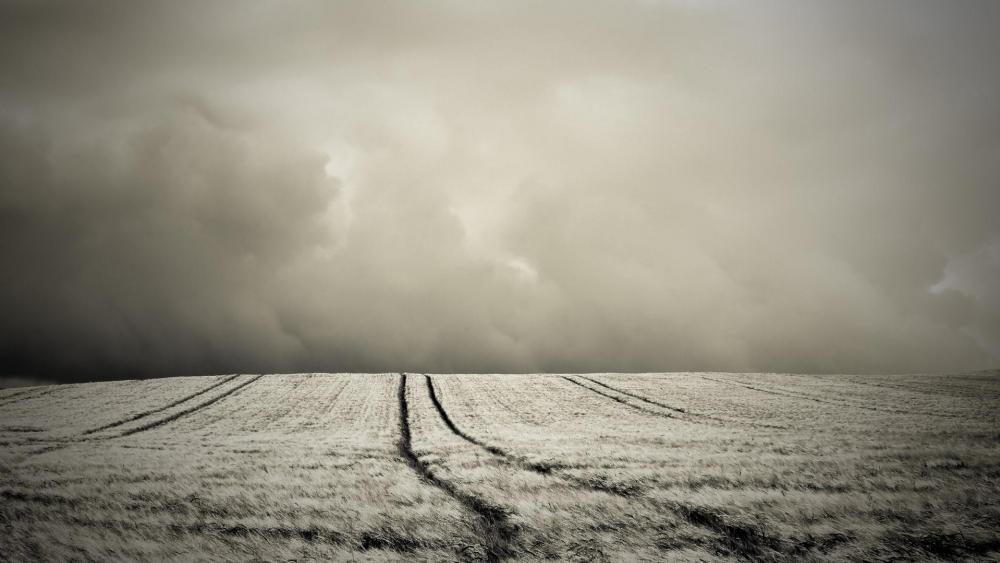 Dark field in the storm wallpaper