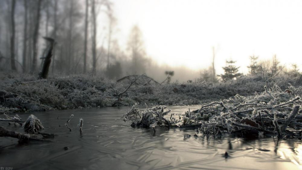 Icy swamp ❄️ wallpaper