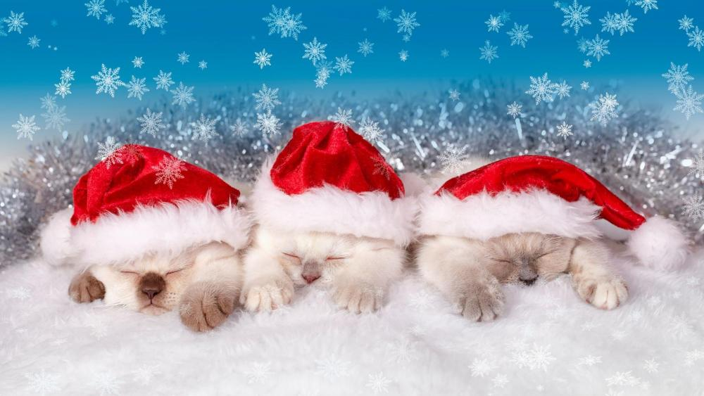 Santa Claus kitten  wallpaper