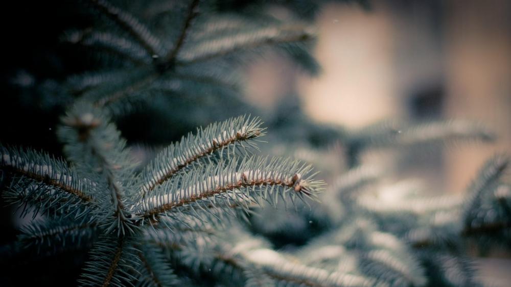 Snowy pine tree wallpaper