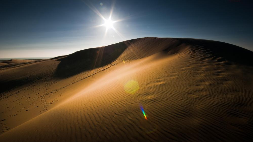 Desert sun wallpaper
