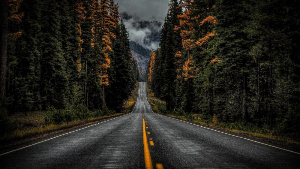 Rainy road wallpaper