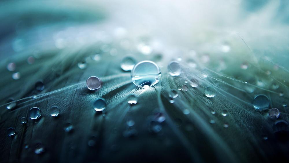 Waterdrops on a leaf wallpaper