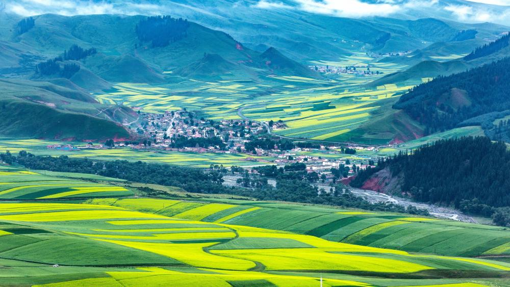 Rape flowers sea at the foot of the Qilian Mountains wallpaper