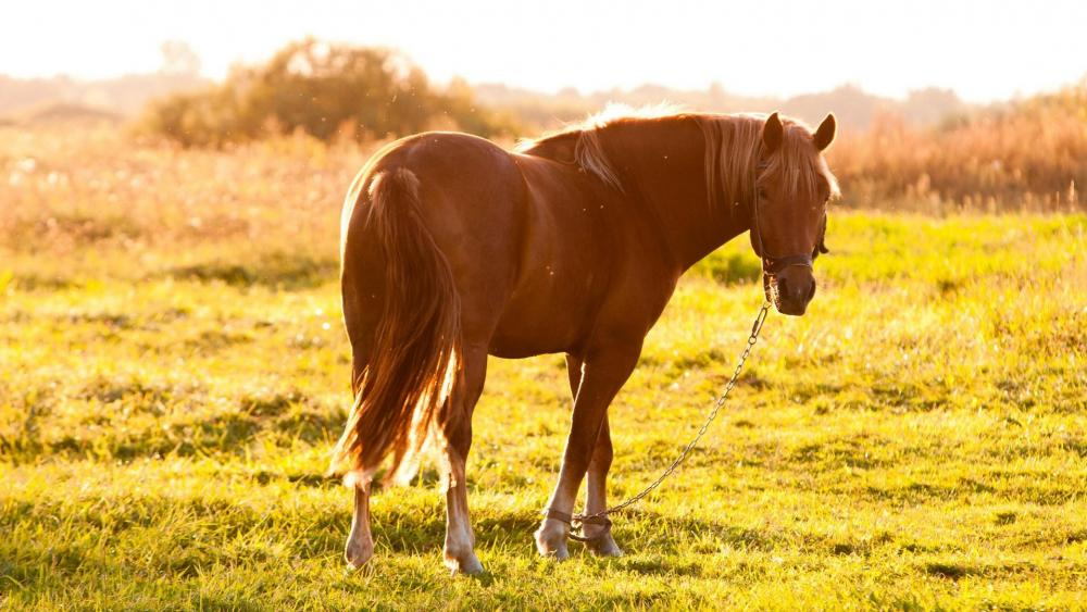 Horse in the summer field wallpaper