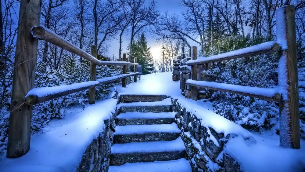 Winter nature photograph wallpaper