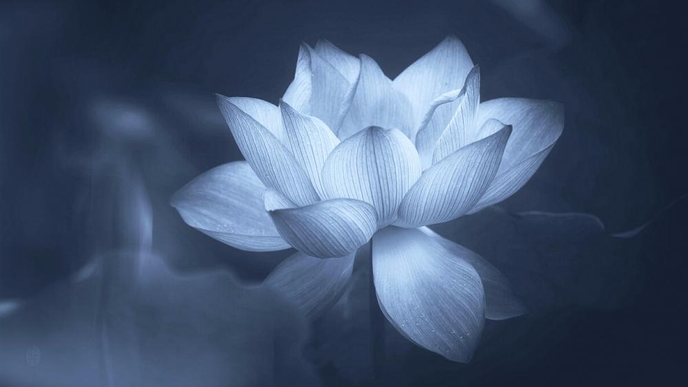 Lotus flower - Monochrome photography wallpaper