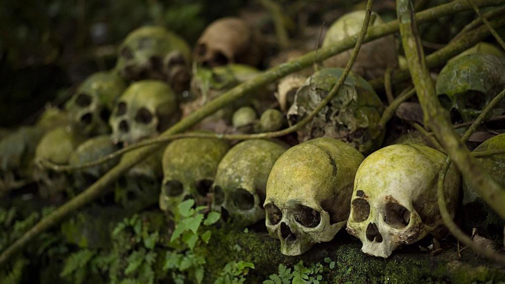 Human skull wallpaper