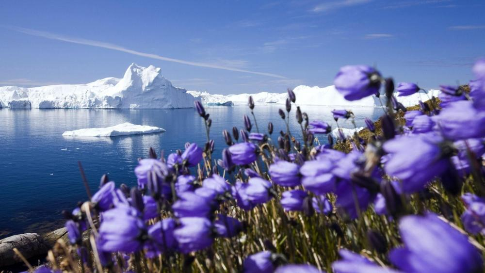 Disko Bay and Jakobshavn Glacier, Ilulissat, Greenland wallpaper