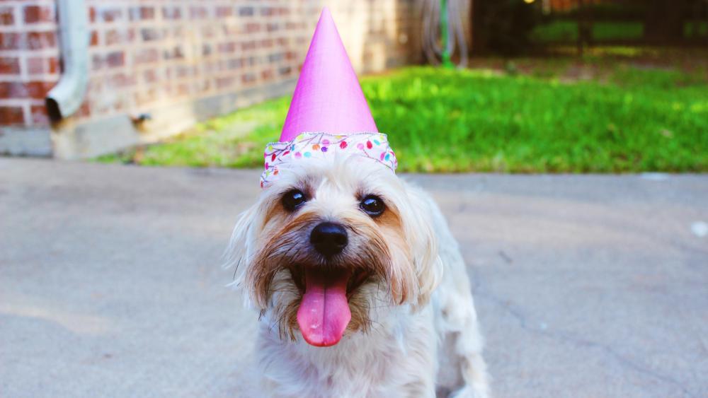 Birthday dog wallpaper