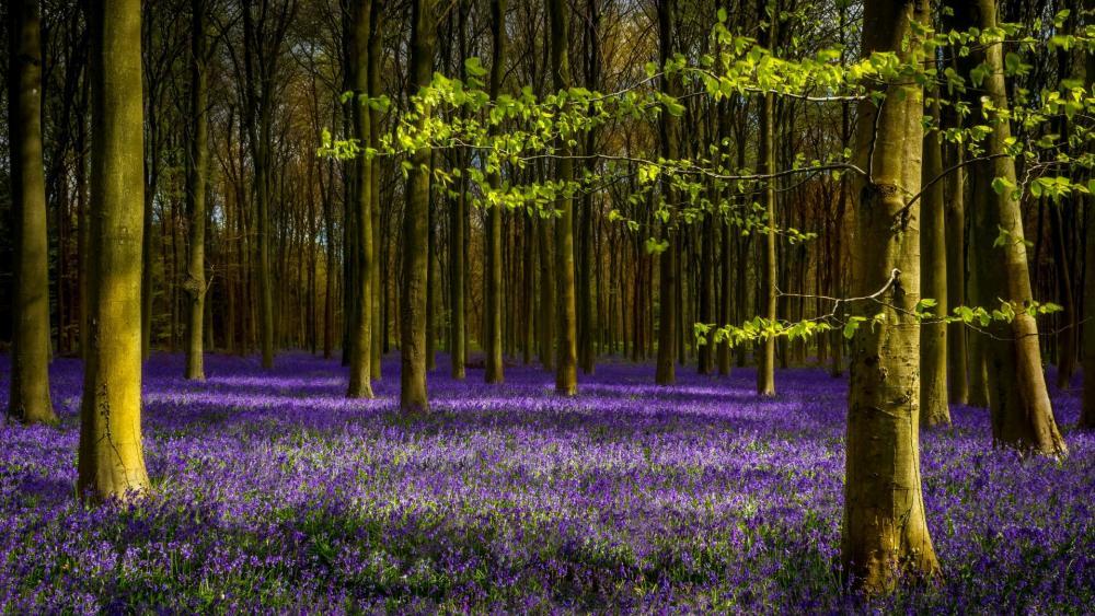 Forest flower field wallpaper