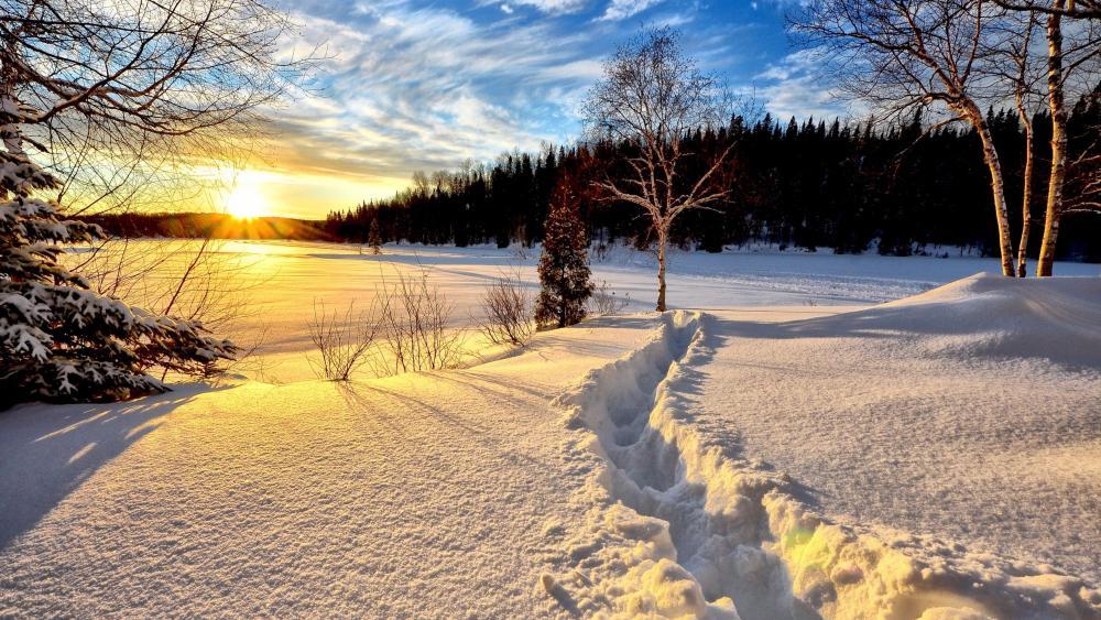 Snow trail wallpaper