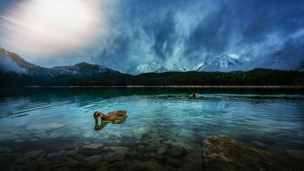 Crystal clear mountain lake with a duck under the clouds wallpaper
