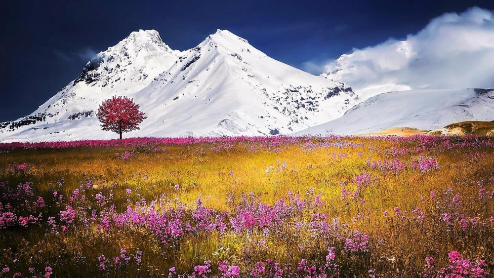 Flower field in the Swiss Alps wallpaper