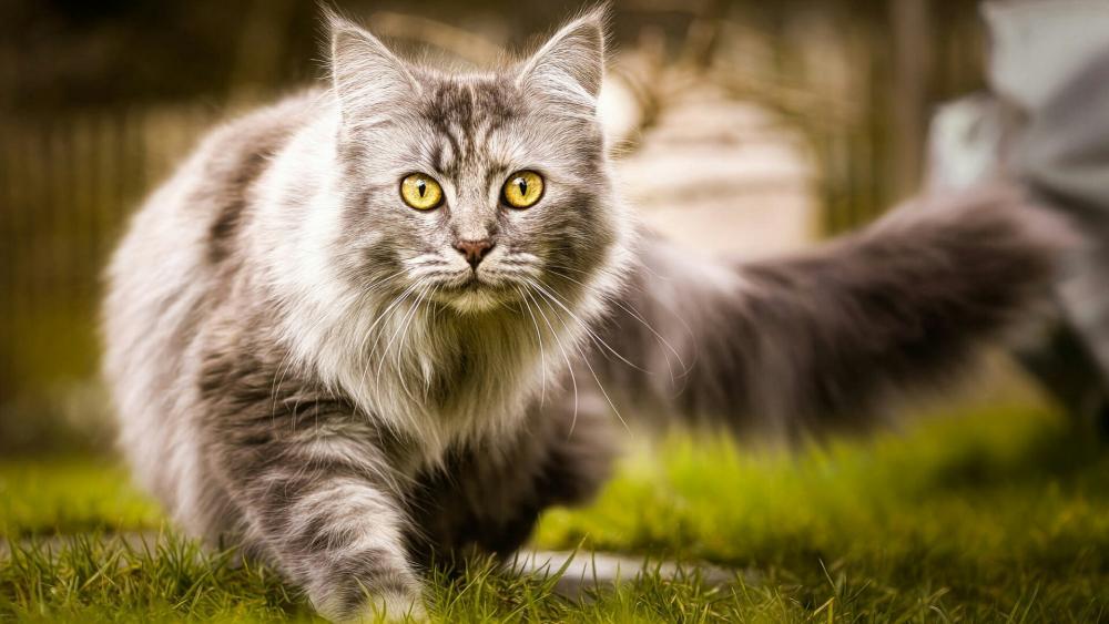 Grey longhaired cat in the green garden wallpaper