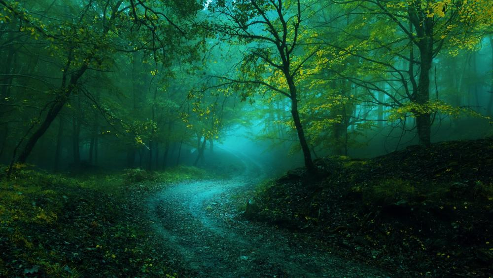 Misty curvy forest path wallpaper