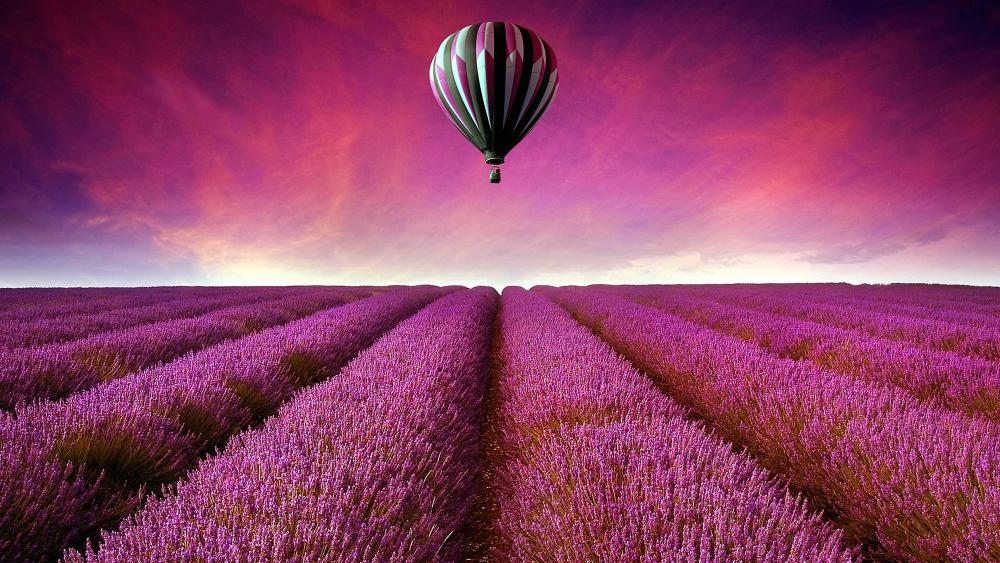 Air balloon above lavender field wallpaper