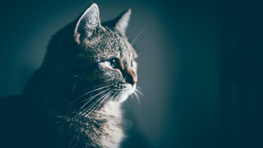 Short haired cat portrait wallpaper