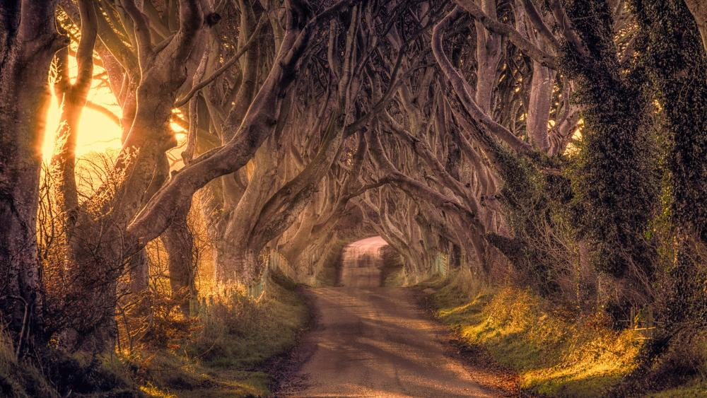 The Dark Hedges - Ballymoney, Northern Ireland wallpaper