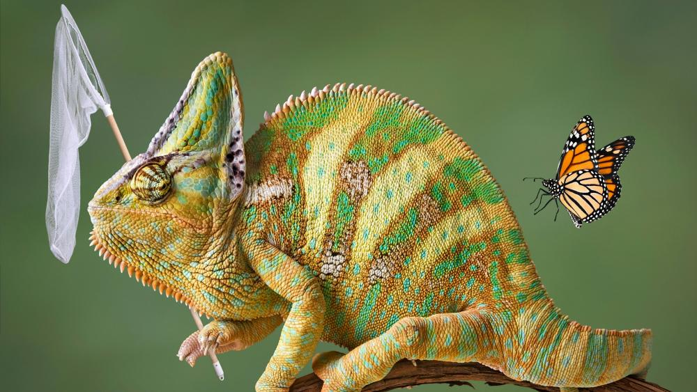 Funny Veiled chameleon wallpaper