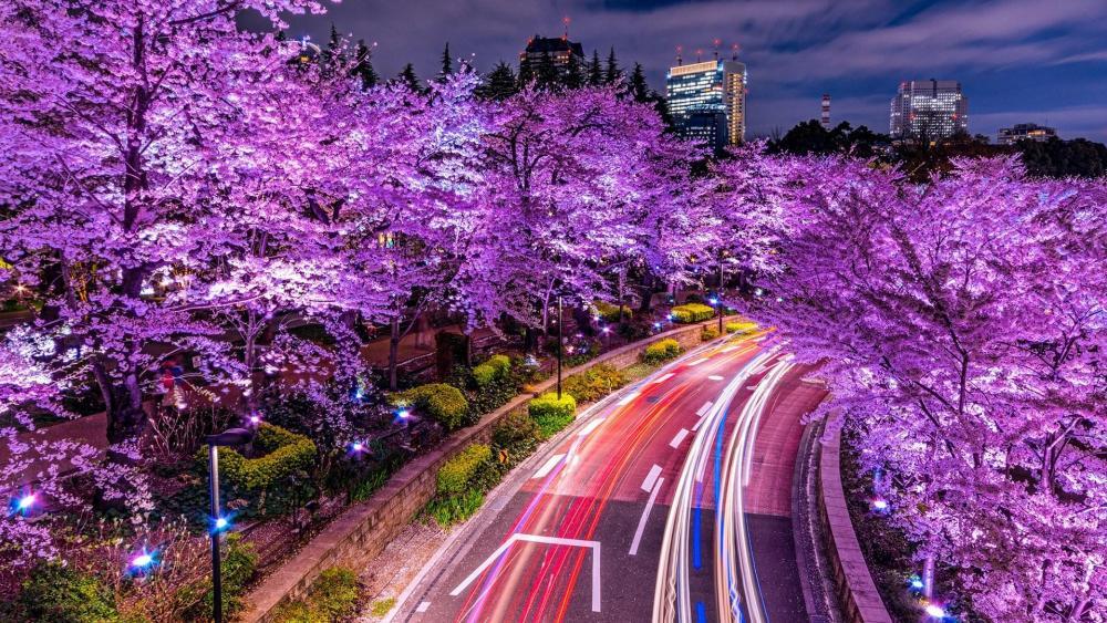 Tokyo Midtown at cherry blossom wallpaper