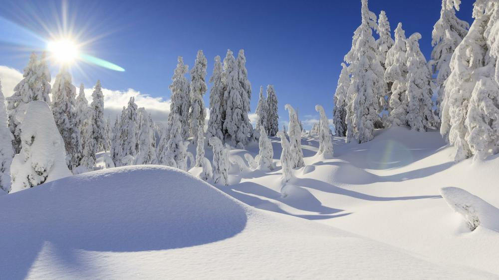 Snow mounds in the winter forest wallpaper