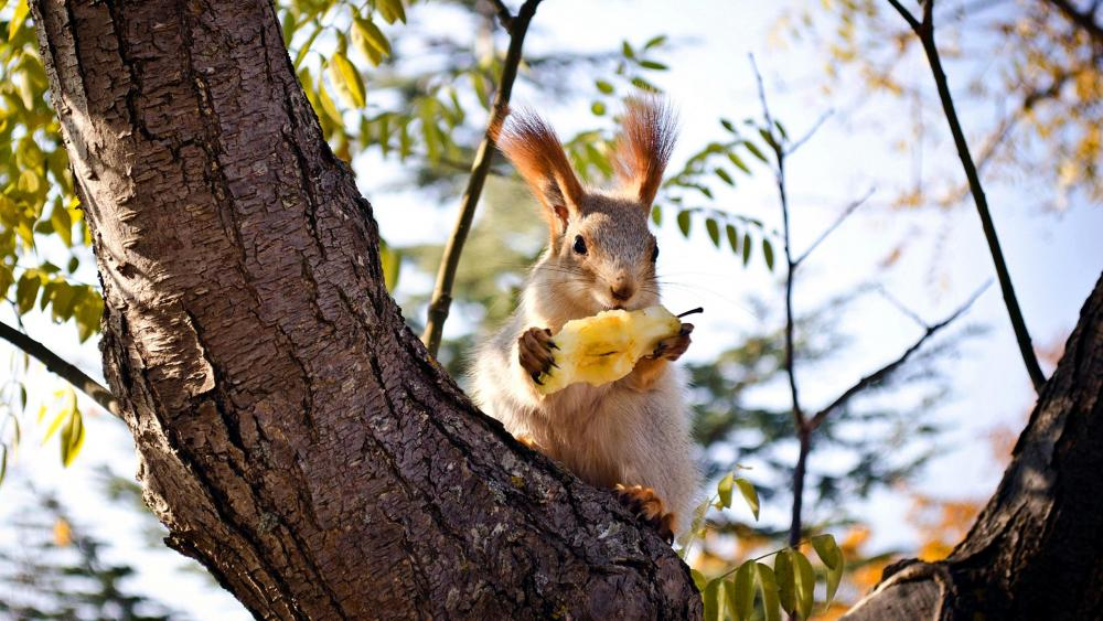 Squirrel sits on tree wallpaper