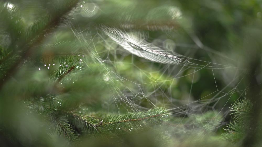 Spider silk - Macro photography wallpaper