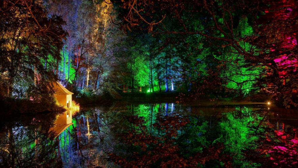 Colorful lights in the forest wallpaper