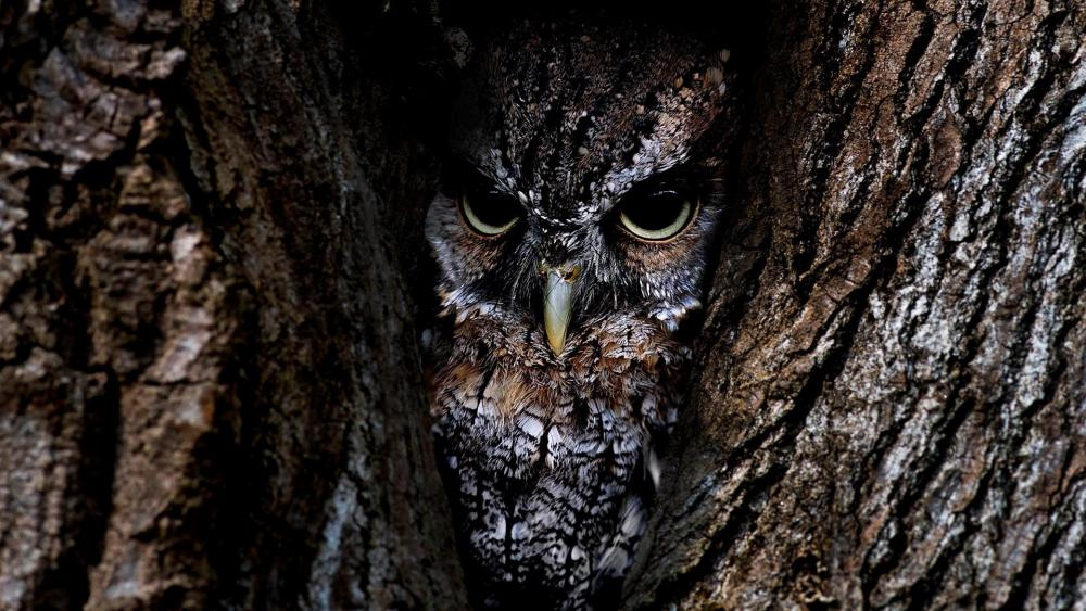 Camouflaging Owl wallpaper