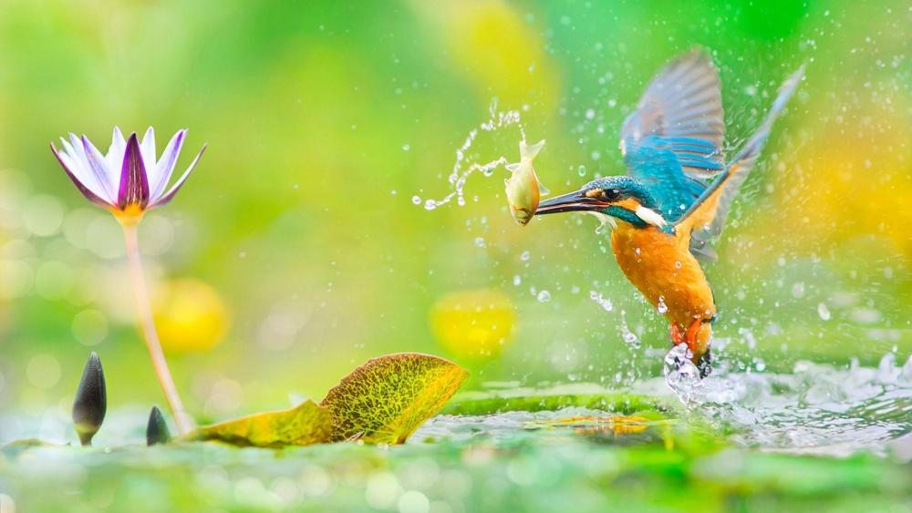 Kingfisher with a fish in his beak wallpaper
