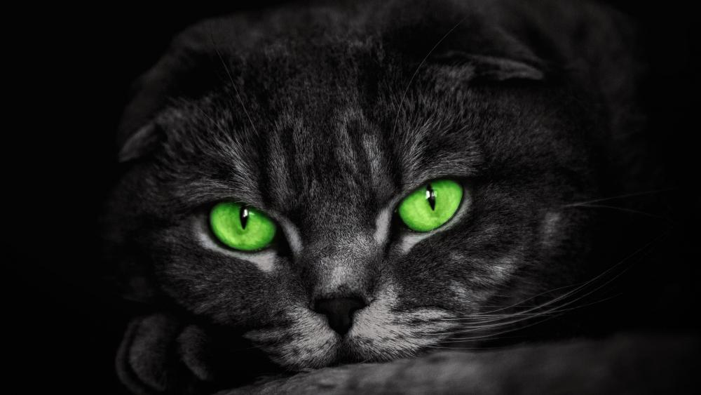 Cat with green eyes wallpaper