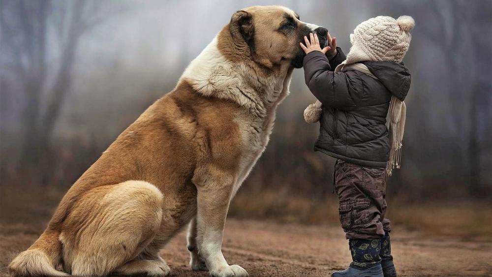 Child and big dog wallpaper