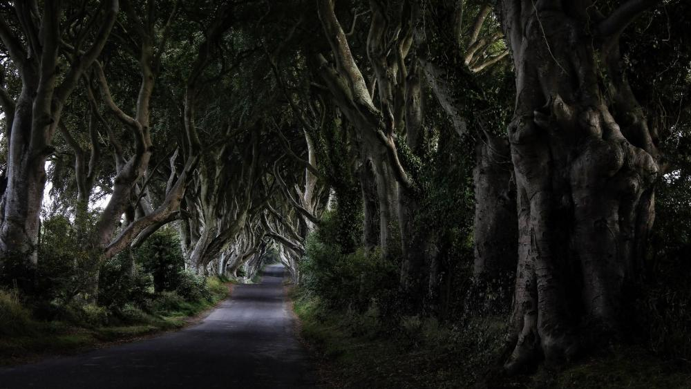 Dark Hedges, Ireland wallpaper