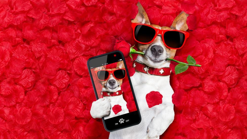 Jack Russell Terrier Selfie wallpaper