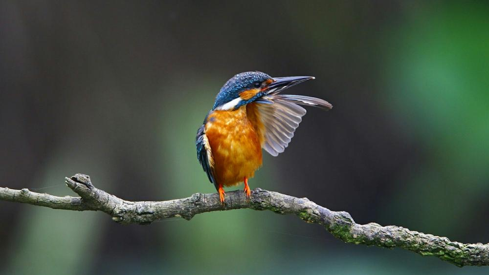 Kingfisher on a twig wallpaper