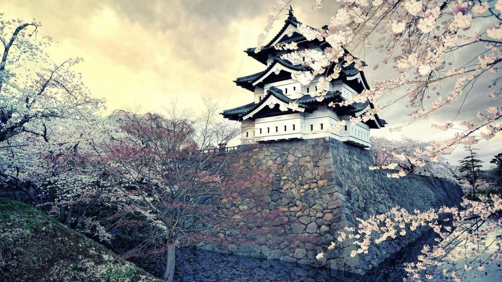 Hirosaki Castle cherry blossom wallpaper