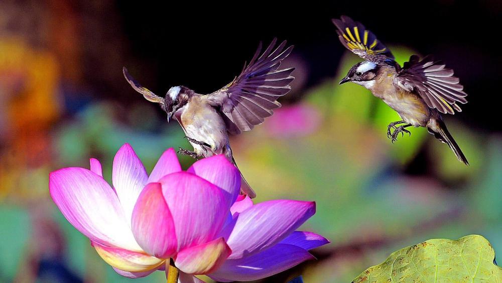 Birds Flower wallpaper