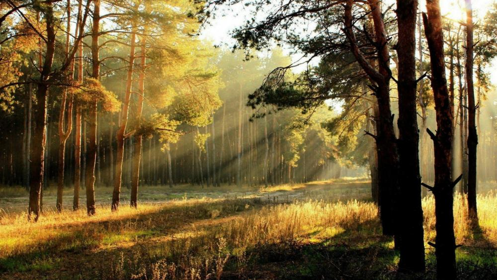 Autumn sunrise in the forest wallpaper