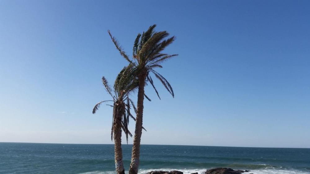 two palms wallpaper