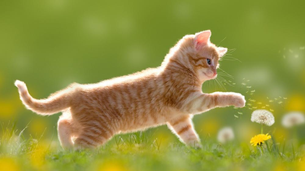 Cute kitten playing with a dandelion flower wallpaper
