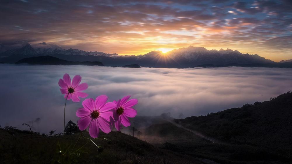 牛背山望贡嘎日出 (Looking  back from Niubei Mountain to Mount Gongga at sunrise) wallpaper