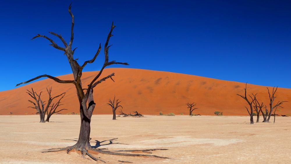 Dead Desert Trees at Dead Vlei (Dead Valley, Namibia) wallpaper